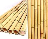bambus-discount.com 20er Set Bambusrohr gelb, Moso Bambus, Gebleicht, Durch. 2,8-3,5cm, Länge 300cm...