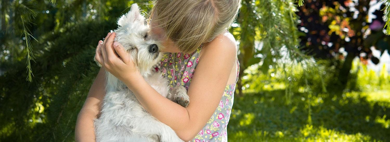 Hund-liebt-Besitzer-Anzeichen
