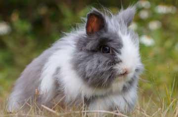 Kaninchen-und-Hasen