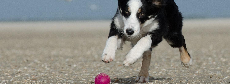 Tipps-zum-Hundetraining