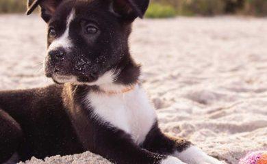 artgerechte Hundehaltung Leitfaden