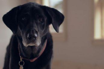 älteren-Hund-adoptieren