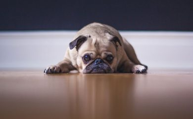 Colostrum-für-Hunde