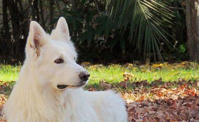 Gründe-Hund-adoptieren