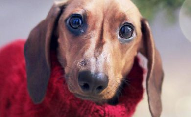 Gründe-für-Hundepullover