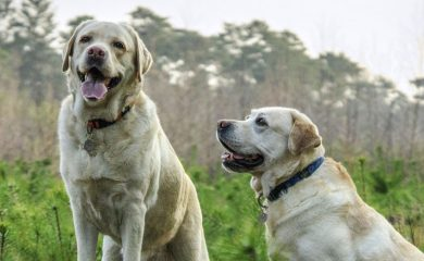 Gute-Hundeerziehung