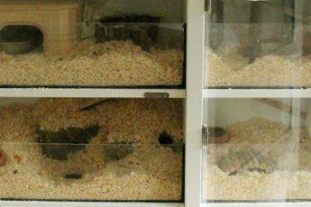 Hamsterkäfig-Eigenbau