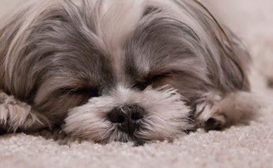 Hund-Fellpflege