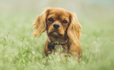 Hund-frisst-Gras