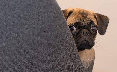 Hund-im-Büro