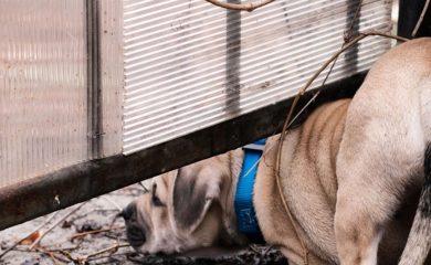 Hund-nicht-das-richtige-Tier