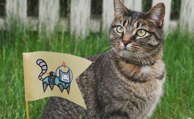 Katze-Eigenheiten