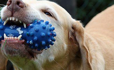 Kauspiele-Hund