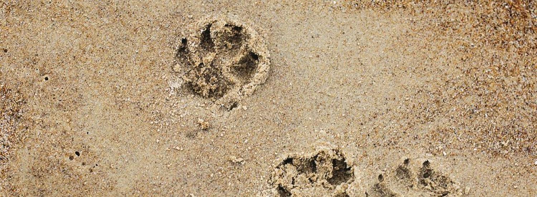 Urlaub-mit-Hund