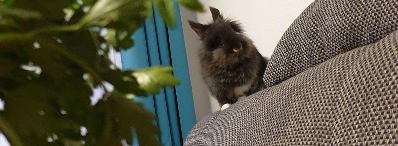 Kaninchen-artgerecht