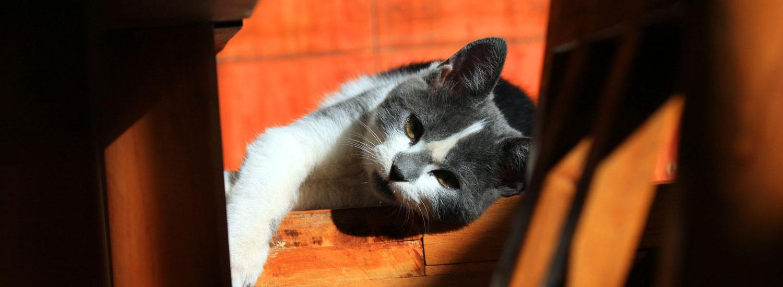 Katze-Krankenversicherung