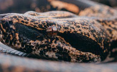 Schlange-artgerecht