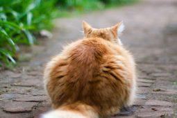 Die Katze an den Freigang gewöhnen – hilfreiche Tipps zum Thema