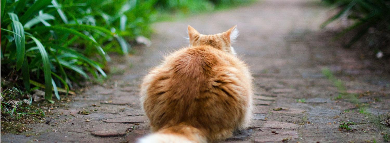 Katze-Freigänger