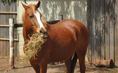 Pferd-richtig-füttern