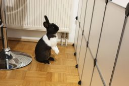 Die besten Beschäftigungsmöglichkeiten & Spielsachen für Kaninchen