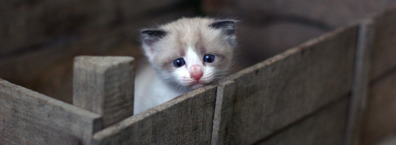 Katzenbaby-gefunden-was-tun