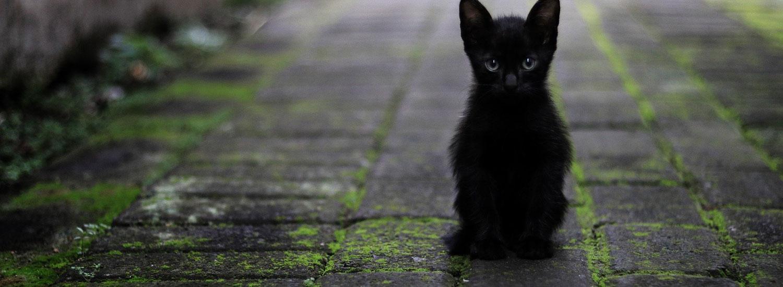 Ernährungsfibel-Katze
