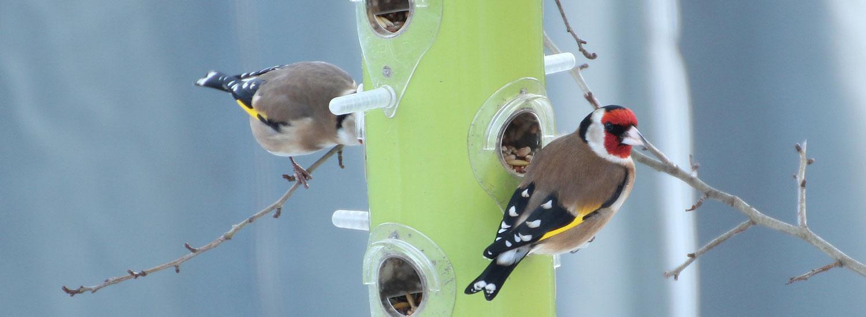 Futtersäule-für-Vögel