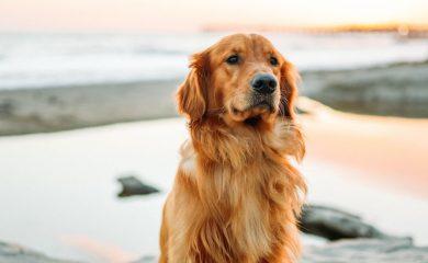 Homöopathie-für-Hunde