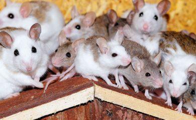 Mäuse-artgerecht