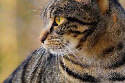 Das sind die 10 beliebtesten Katzenrassen in Österreich & Deutschland