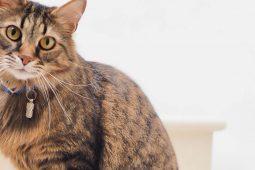 8 Gründe, eine Katze zu adoptieren