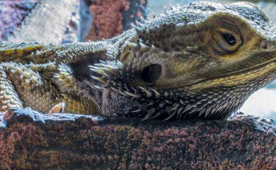 Aquarium-als-Terrarium
