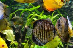 Warum braucht es CO2 im Aquarium?