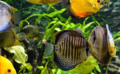 CO2-im-Aquarium