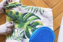 Das sind die wichtigsten Hilfsmittel zur Fellpflege unserer geliebten Haustiere