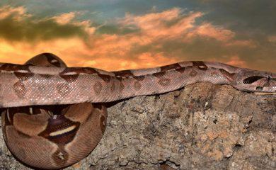 Reptilien-und-Amphibien-als-Haustiere