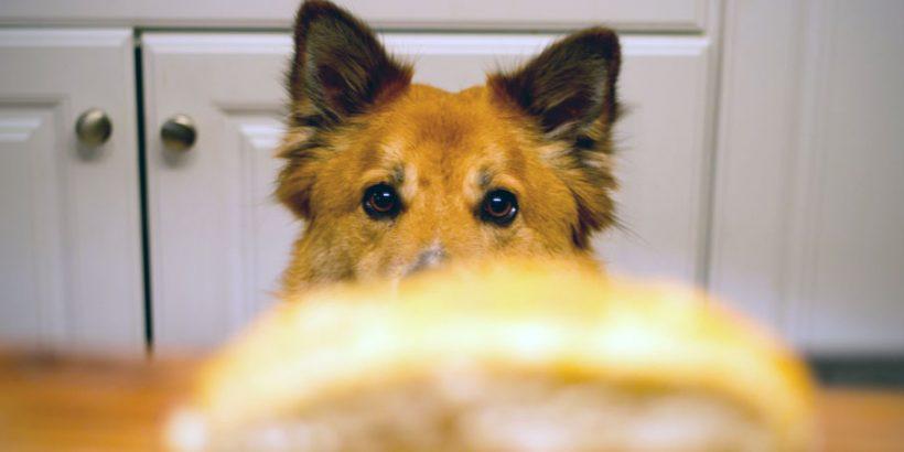 Glutenunverträglichkeit-beim-Hund