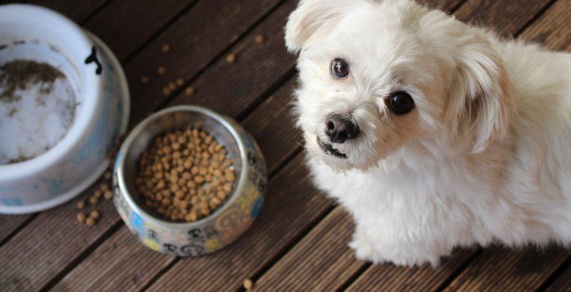 Hundefutter-Tierversuche