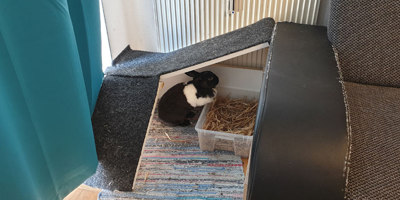 Kaninchenrampe