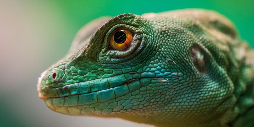 Reptilienmeldepflicht